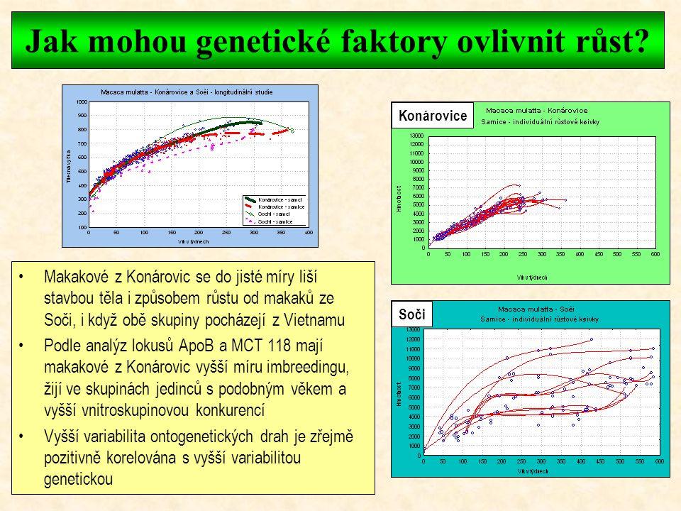 Jak mohou genetické faktory ovlivnit růst