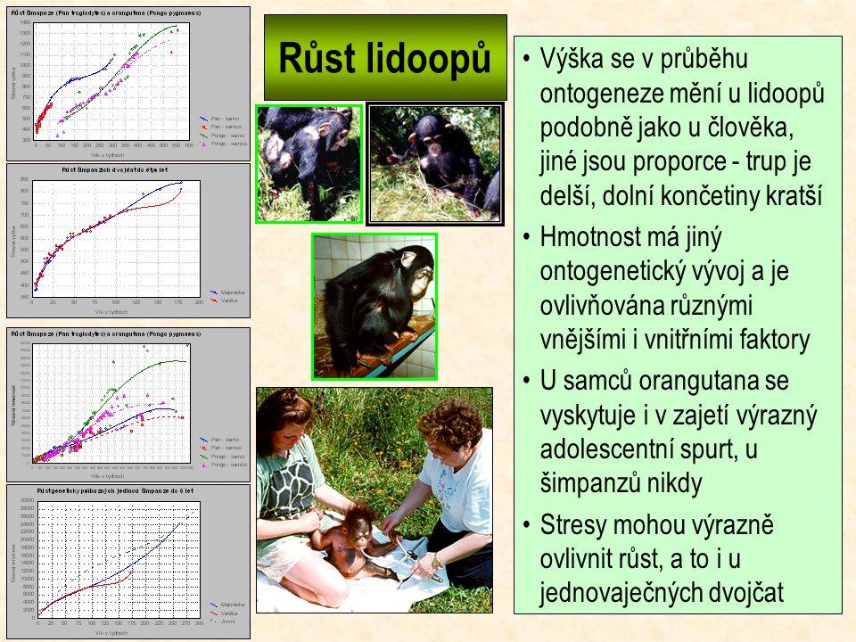 Růst lidoopů Výška se v průběhu ontogeneze mění u lidoopů podobně jako u člověka, jiné jsou proporce - trup je delší, dolní končetiny kratší.