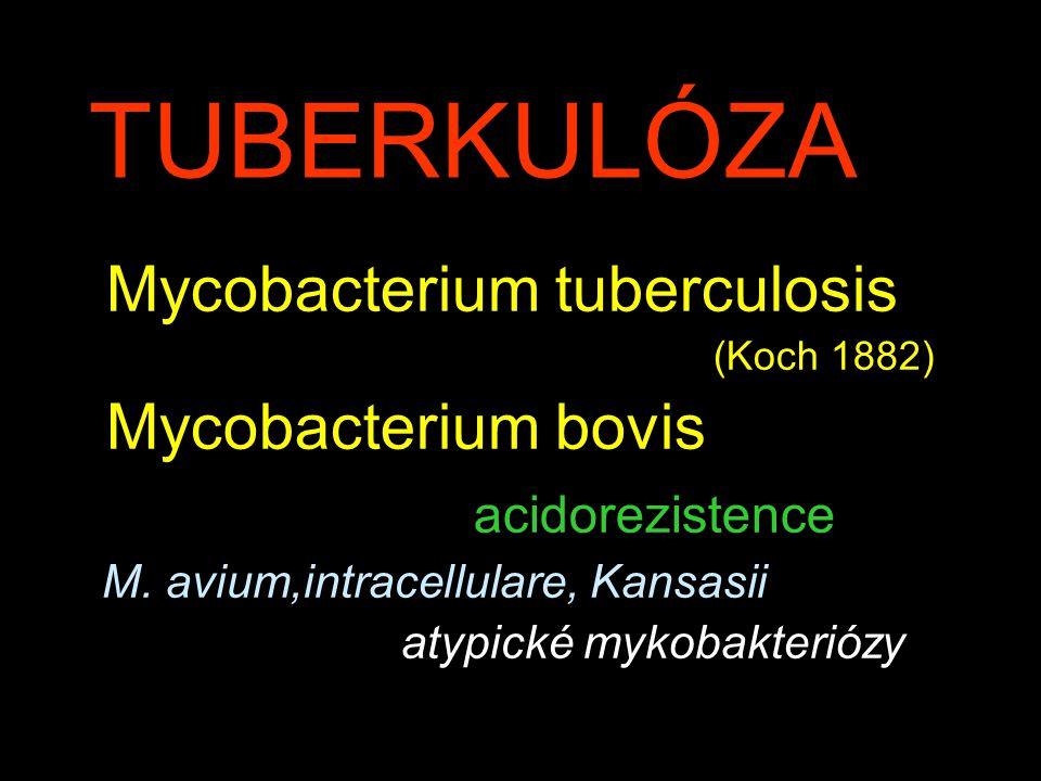 TUBERKULÓZA Mycobacterium tuberculosis Mycobacterium bovis