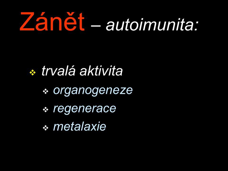 Zánět – autoimunita: trvalá aktivita organogeneze regenerace metalaxie