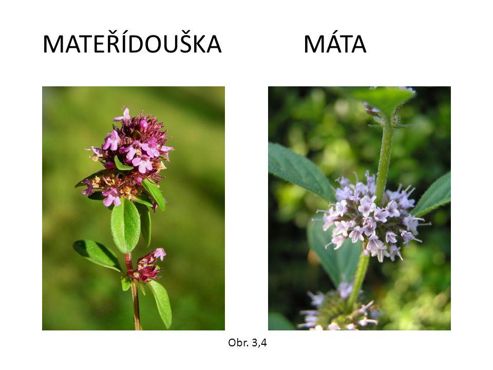 MATEŘÍDOUŠKA MÁTA Obr. 3,4