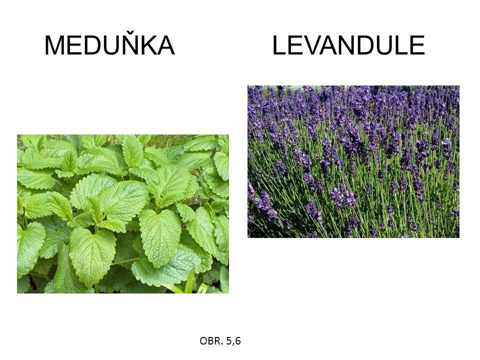 MEDUŇKA LEVANDULE OBR. 5,6