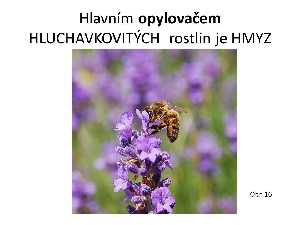 Hlavním opylovačem HLUCHAVKOVITÝCH rostlin je HMYZ