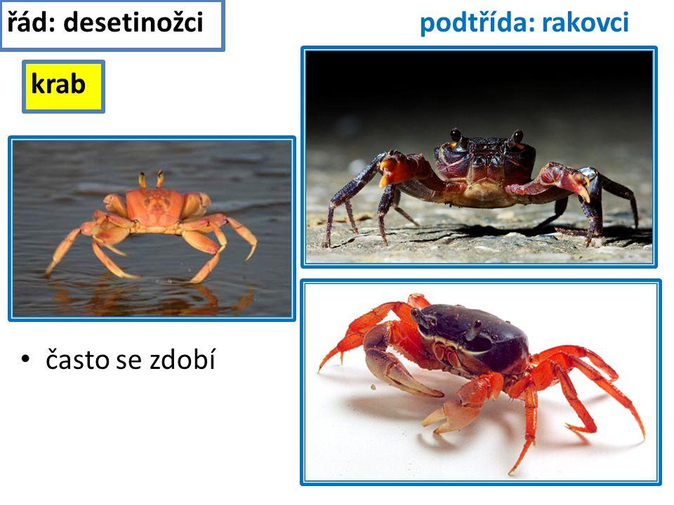 řád: desetinožci podtřída: rakovci krab často se zdobí