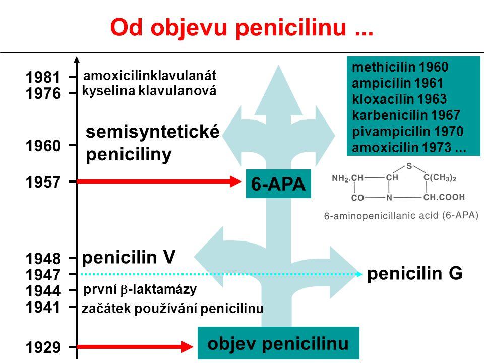 Od objevu penicilinu ... semisyntetické peniciliny 6-APA penicilin V