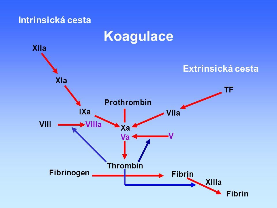 Koagulace Intrinsická cesta Extrinsická cesta XIIa XIa TF Prothrombin