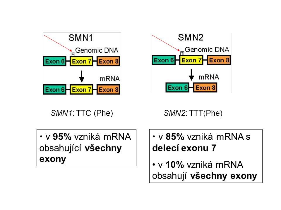 v 95% vzniká mRNA obsahující všechny exony