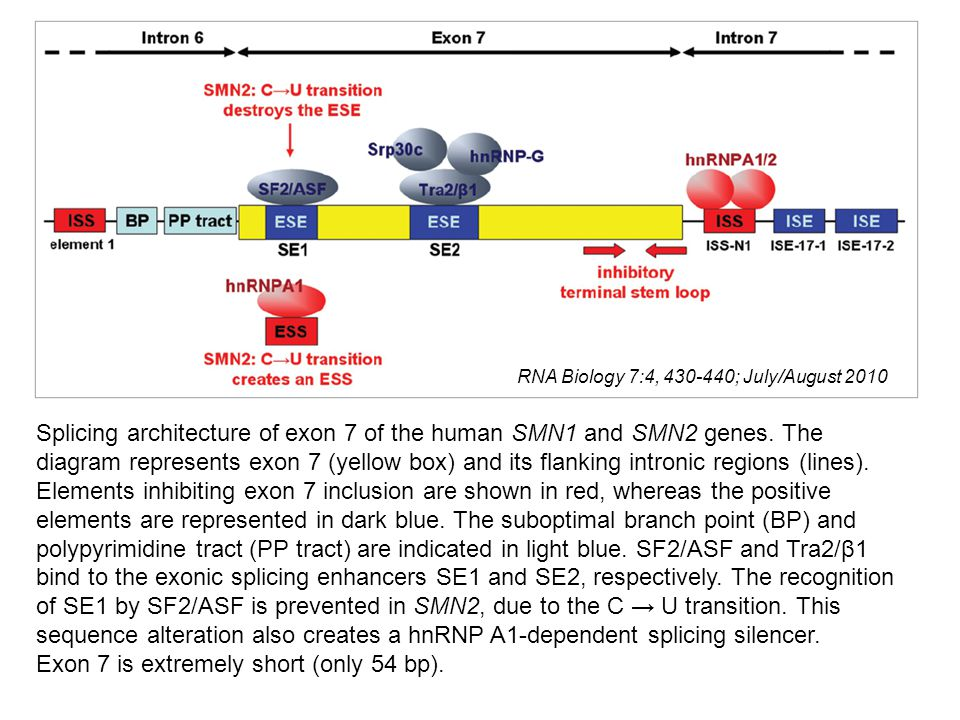 RNA Biology 7:4, 430-440; July/August 2010