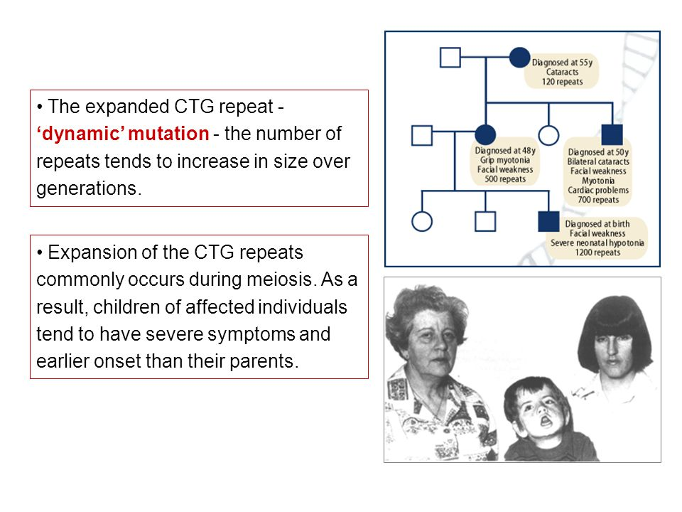 The expanded CTG repeat - 'dynamic' mutation - the number of repeats tends to increase in size over generations.