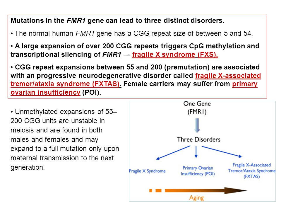 Mutations in the FMR1 gene can lead to three distinct disorders.