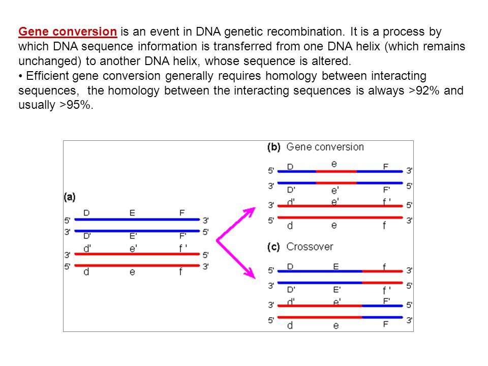 Gene conversion is an event in DNA genetic recombination