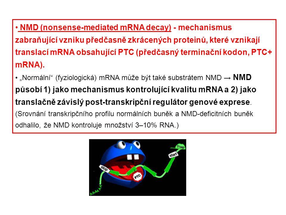 NMD (nonsense-mediated mRNA decay) - mechanismus zabraňující vzniku předčasně zkrácených proteinů, které vznikají translací mRNA obsahující PTC (předčasný terminační kodon, PTC+ mRNA).