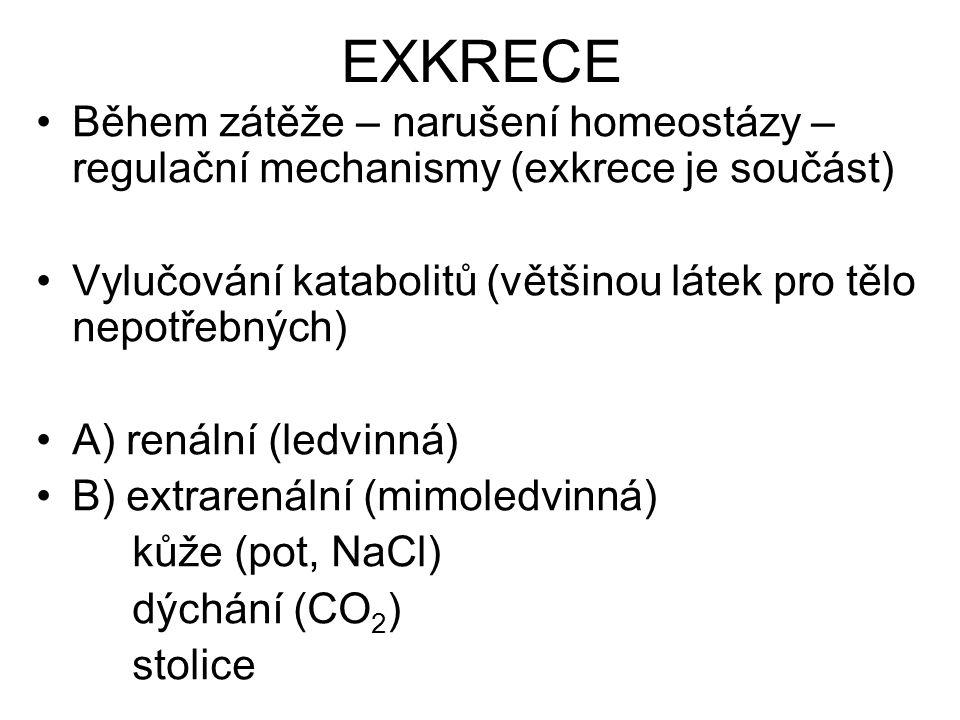 EXKRECE Během zátěže – narušení homeostázy – regulační mechanismy (exkrece je součást) Vylučování katabolitů (většinou látek pro tělo nepotřebných)