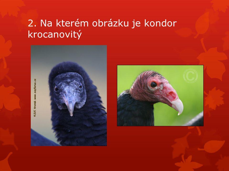 2. Na kterém obrázku je kondor krocanovitý