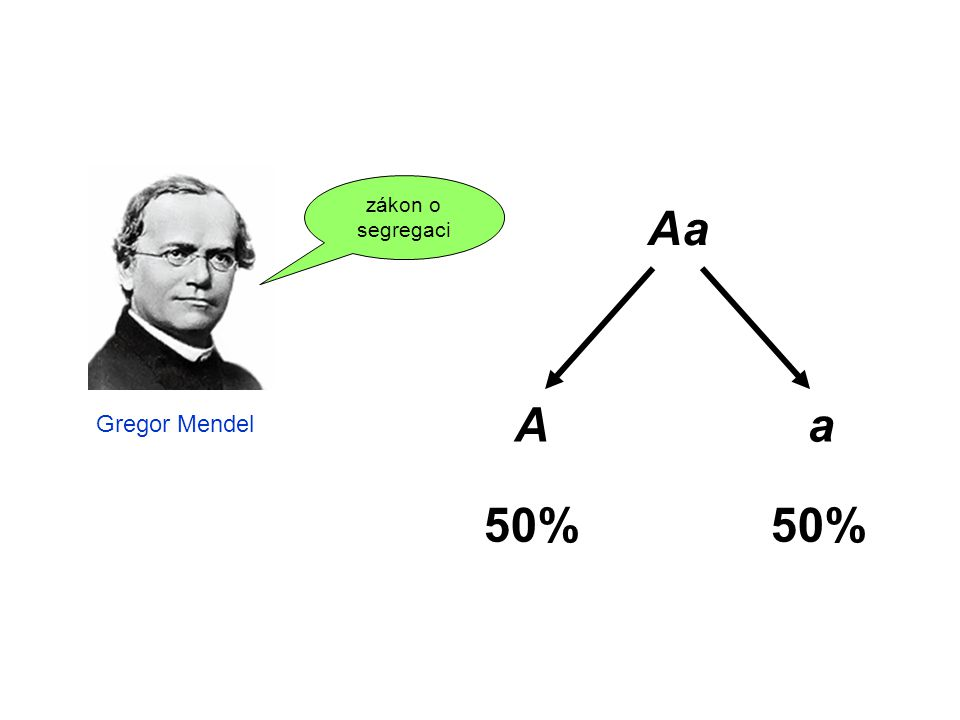zákon o segregaci Aa A a 50% Gregor Mendel