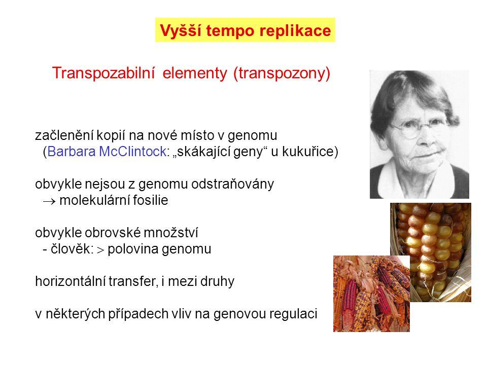 Transpozabilní elementy (transpozony)