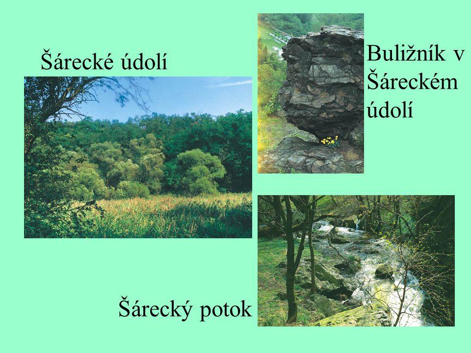 Šárecké údolí Buližník v Šáreckém údolí Šárecký potok