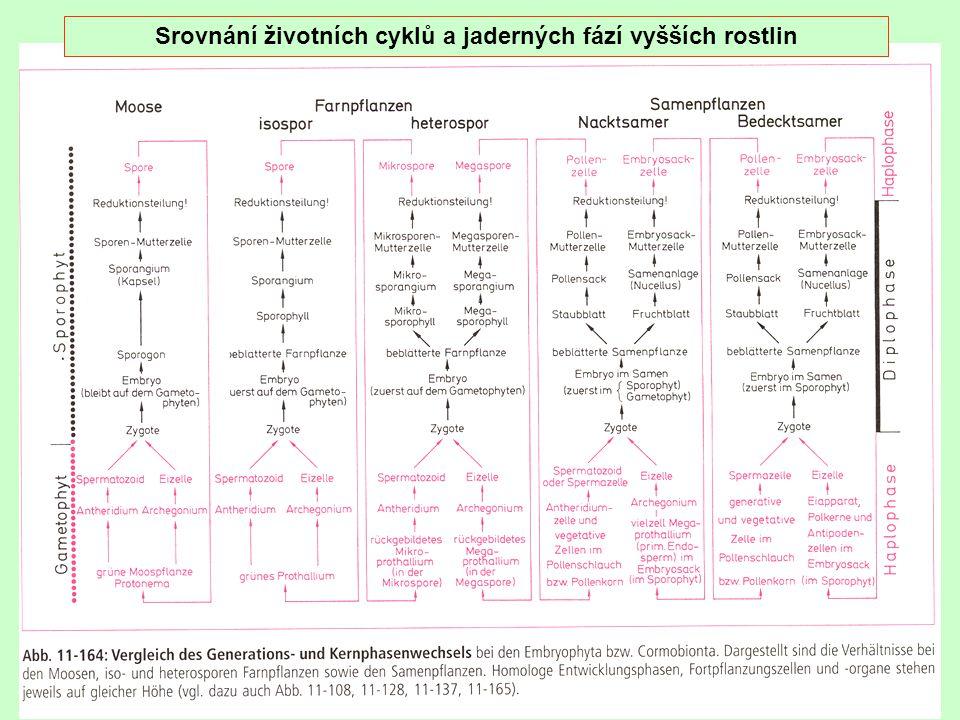 Srovnání životních cyklů a jaderných fází vyšších rostlin