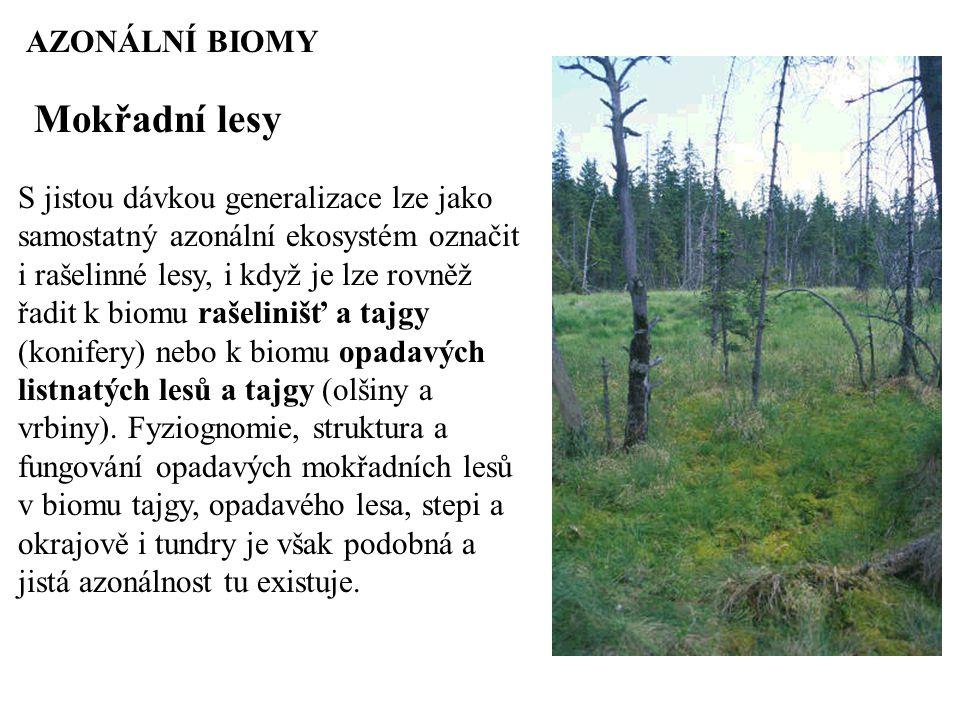 Mokřadní lesy AZONÁLNÍ BIOMY