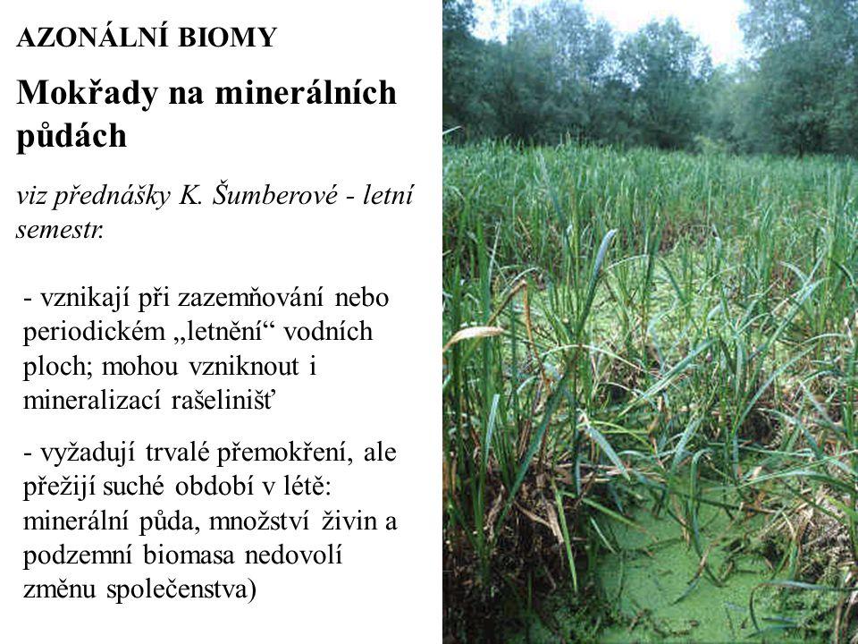 Mokřady na minerálních půdách