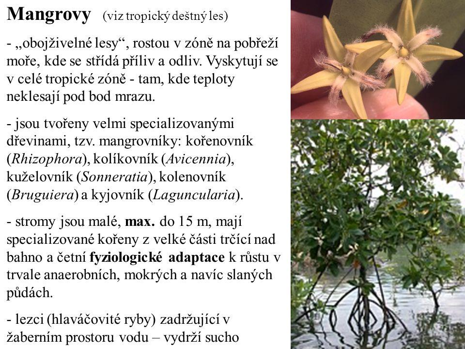 Mangrovy (viz tropický deštný les)