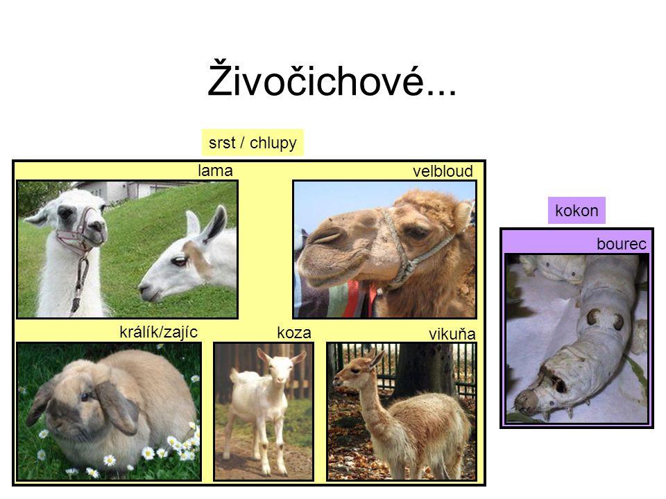 Živočichové... srst / chlupy lama velbloud kokon bourec králík/zajíc