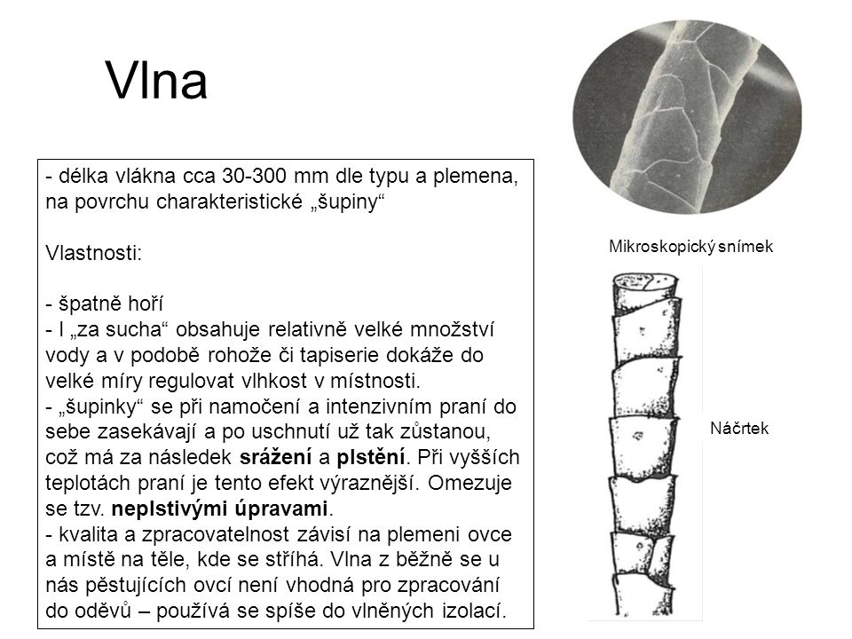 """Vlna - délka vlákna cca 30-300 mm dle typu a plemena, na povrchu charakteristické """"šupiny Vlastnosti:"""
