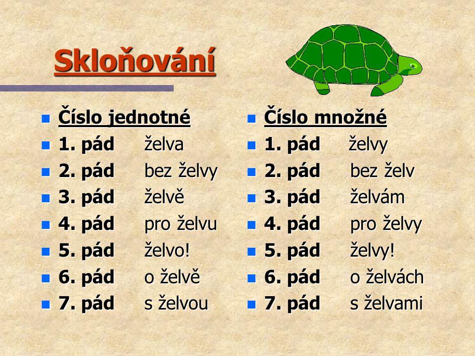 Skloňování Číslo jednotné 1. pád želva 2. pád bez želvy 3. pád želvě