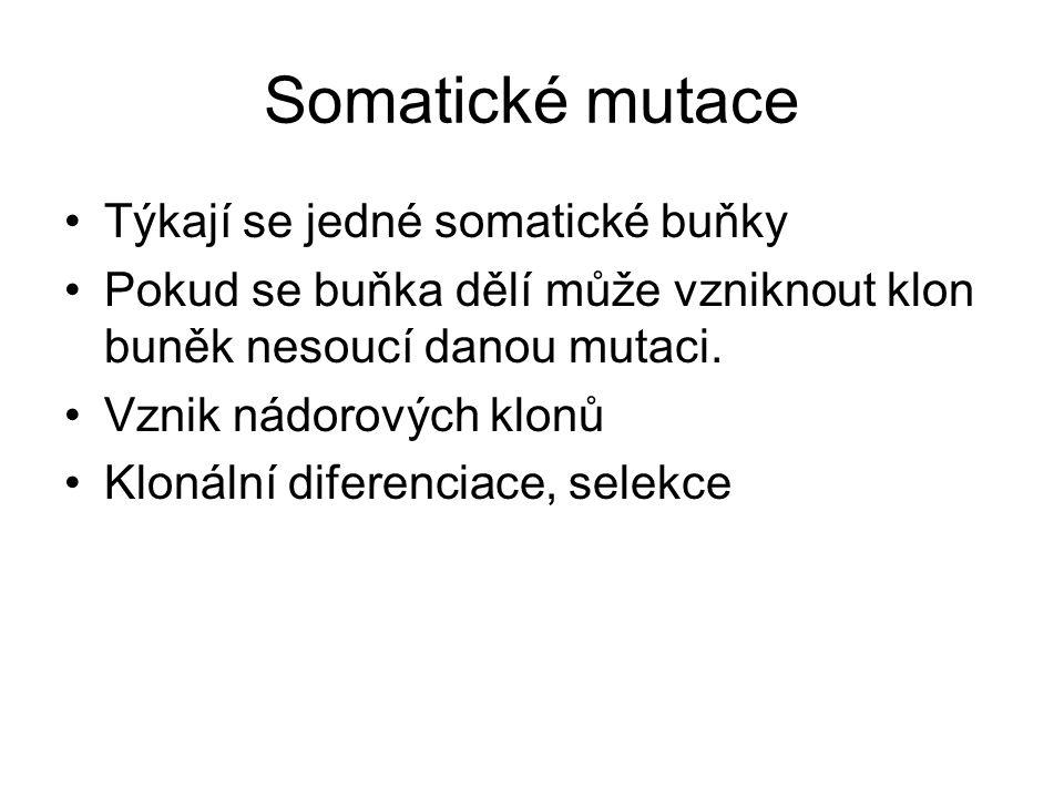 Somatické mutace Týkají se jedné somatické buňky