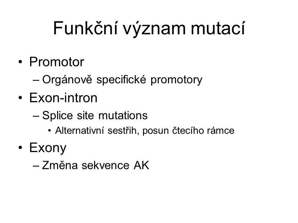 Funkční význam mutací Promotor Exon-intron Exony