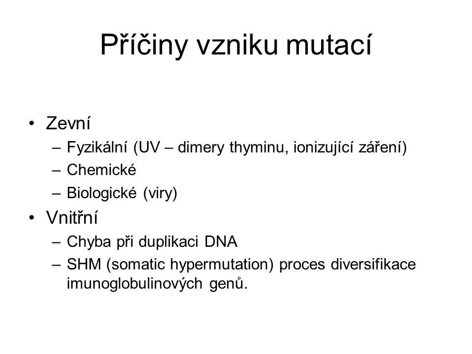 Příčiny vzniku mutací Zevní Vnitřní