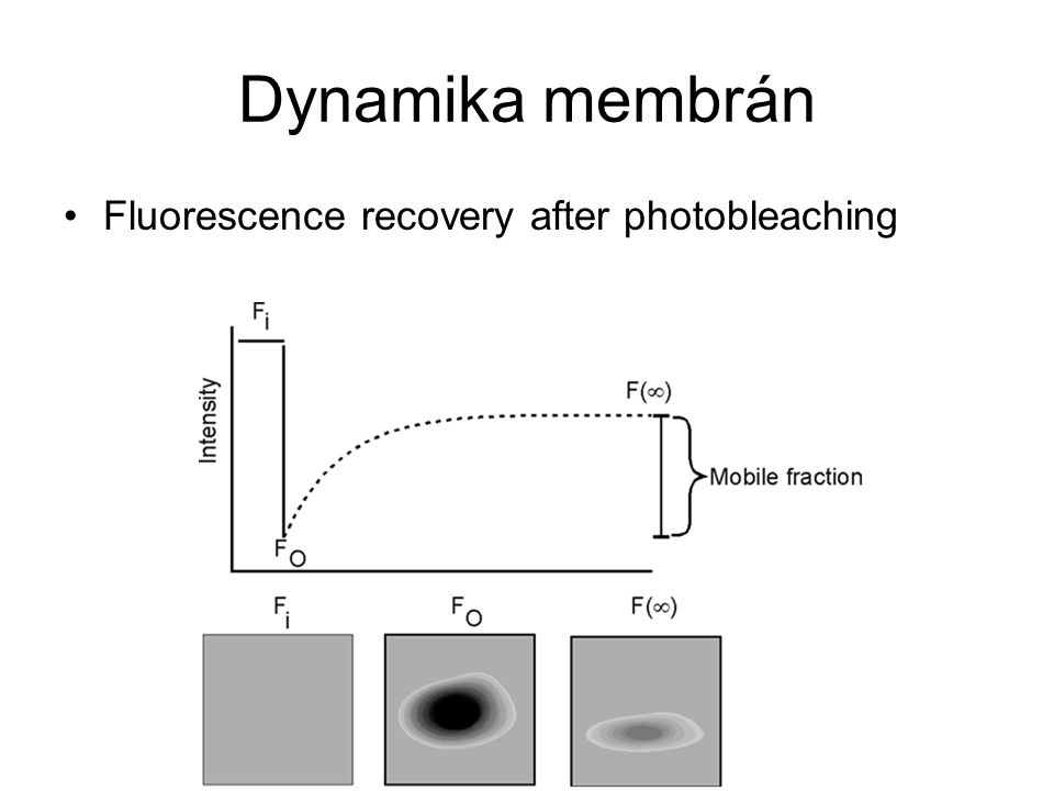 Dynamika membrán Fluorescence recovery after photobleaching
