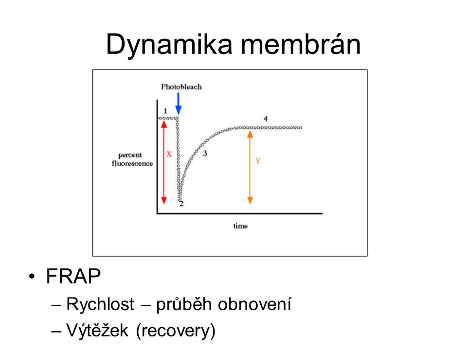 Dynamika membrán FRAP Rychlost – průběh obnovení Výtěžek (recovery)