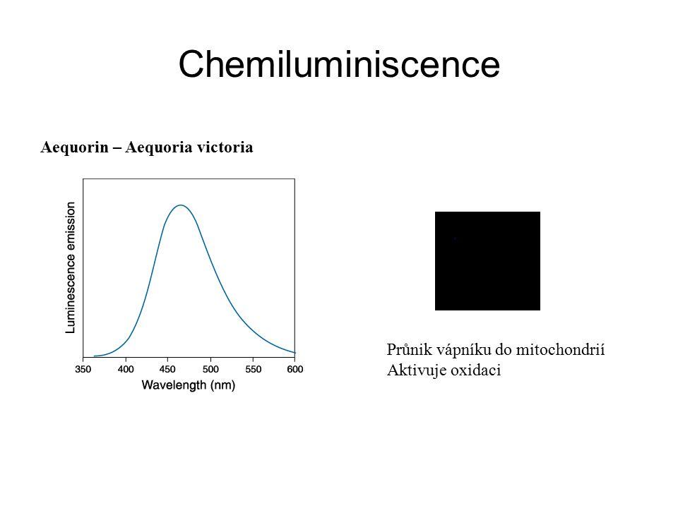 Chemiluminiscence Aequorin – Aequoria victoria