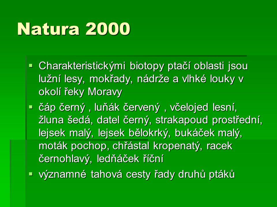 Natura 2000 Charakteristickými biotopy ptačí oblasti jsou lužní lesy, mokřady, nádrže a vlhké louky v okolí řeky Moravy.