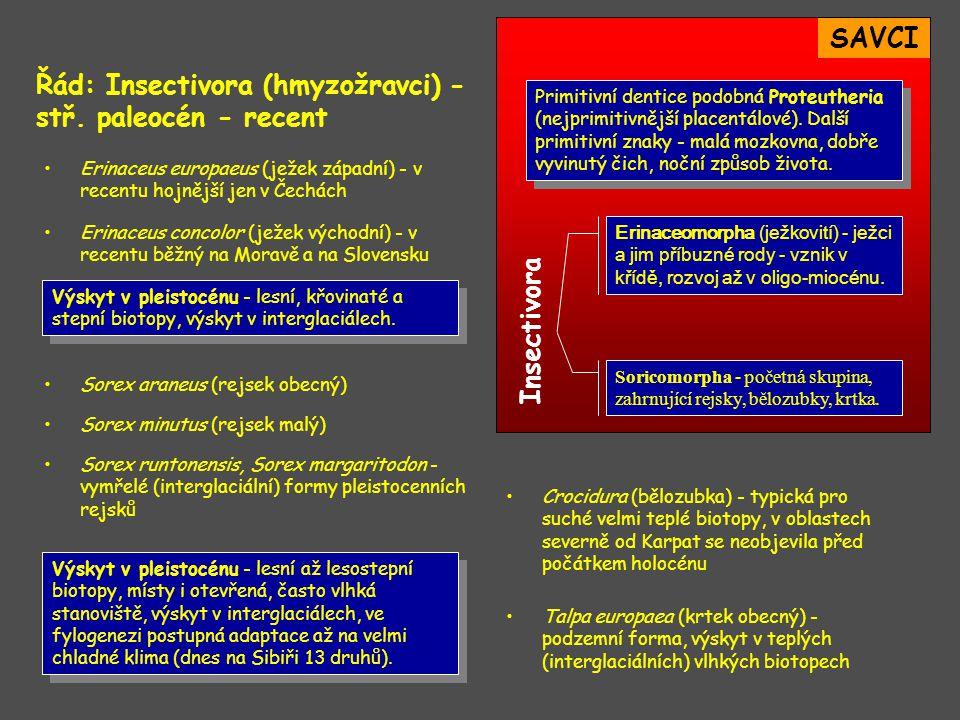 Řád: Insectivora (hmyzožravci) - stř. paleocén - recent
