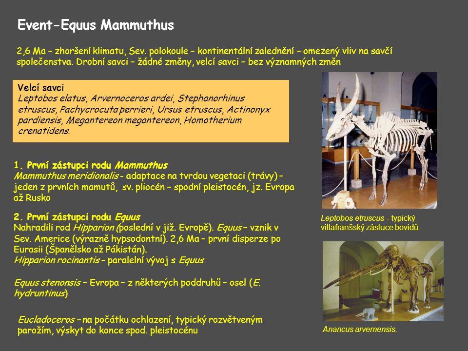 Event-Equus Mammuthus