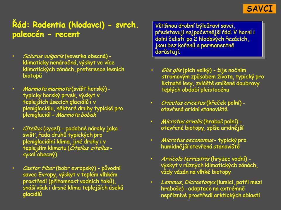 Řád: Rodentia (hlodavci) - svrch. paleocén - recent