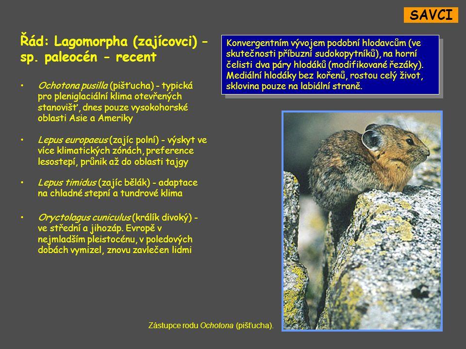 Řád: Lagomorpha (zajícovci) - sp. paleocén - recent