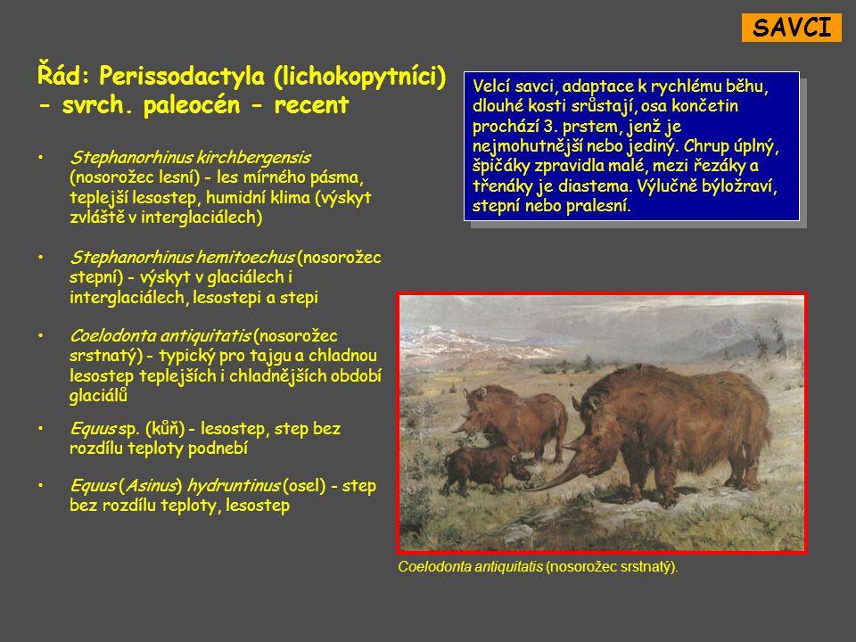 Řád: Perissodactyla (lichokopytníci) - svrch. paleocén - recent