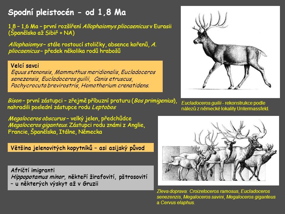 Spodní pleistocén - od 1,8 Ma