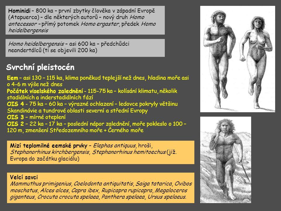 Hominidi – 800 ka – první zbytky člověka v západní Evropě (Atapuerca) – dle některých autorů – nový druh Homo antecessor – přímý potomek Homo ergaster, předek Homo heidelbergensis