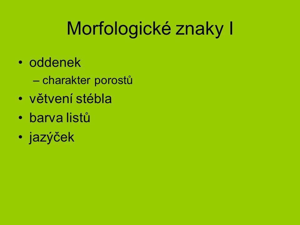 Morfologické znaky I oddenek větvení stébla barva listů jazýček