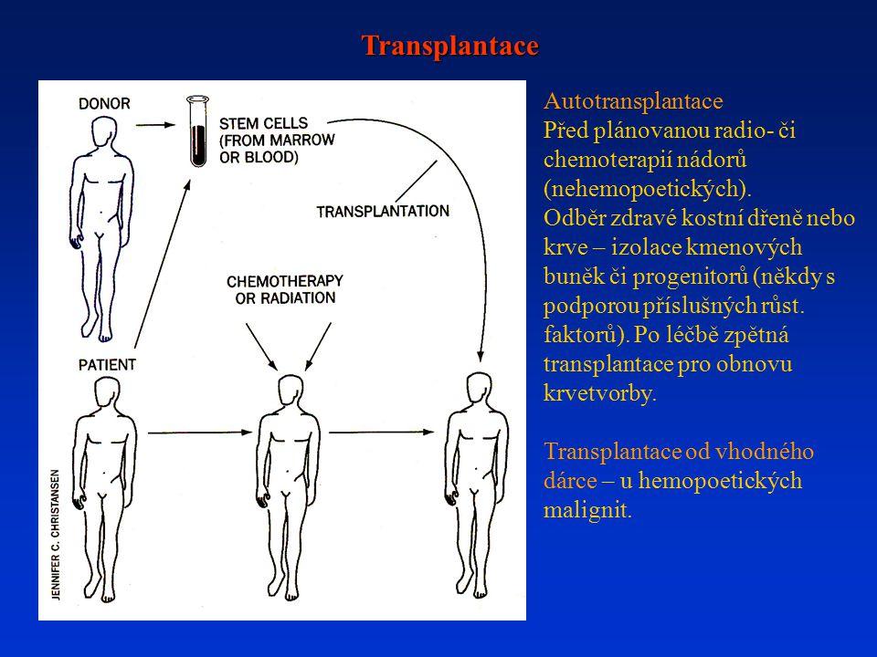 Transplantace Autotransplantace