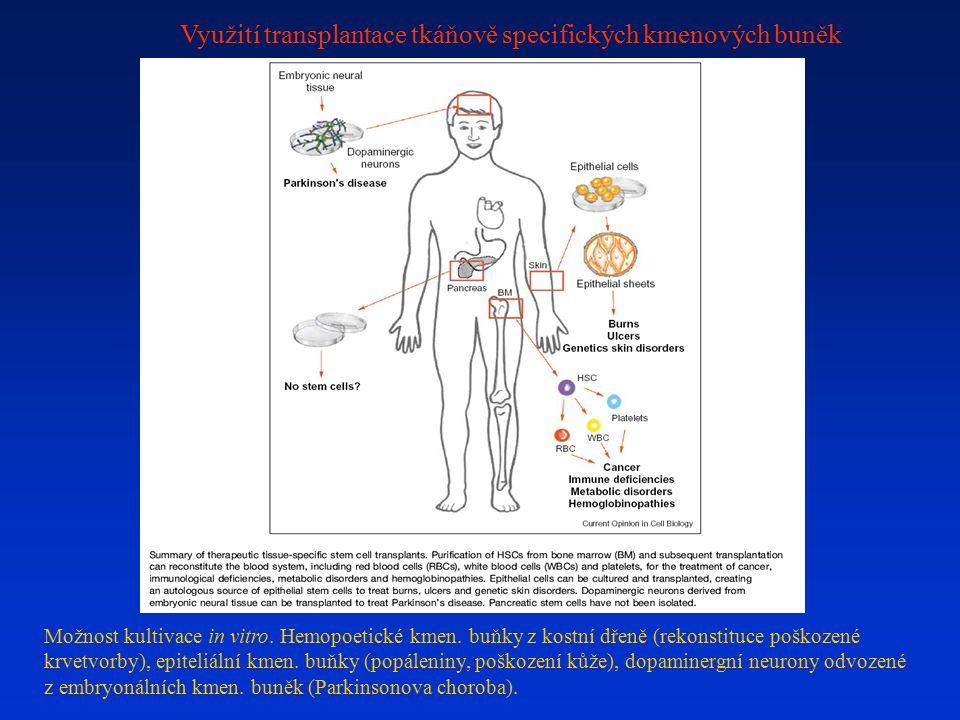 Využití transplantace tkáňově specifických kmenových buněk