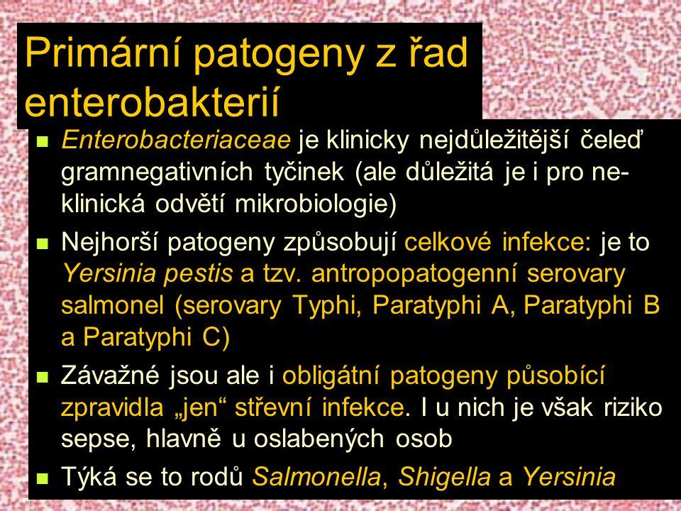 Primární patogeny z řad enterobakterií