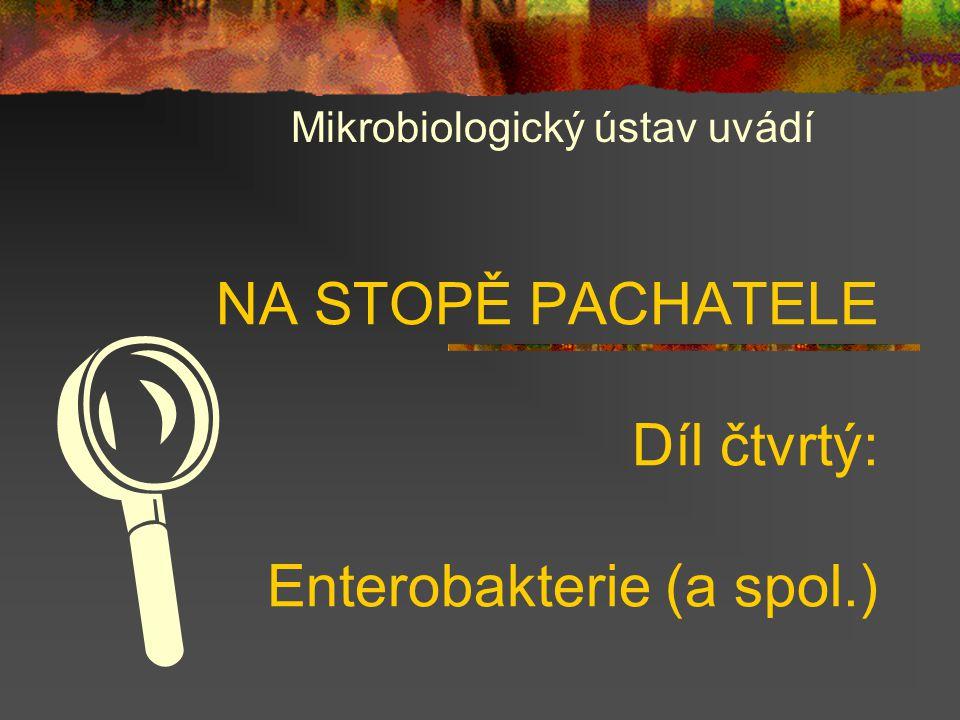 NA STOPĚ PACHATELE Díl čtvrtý: Enterobakterie (a spol.)
