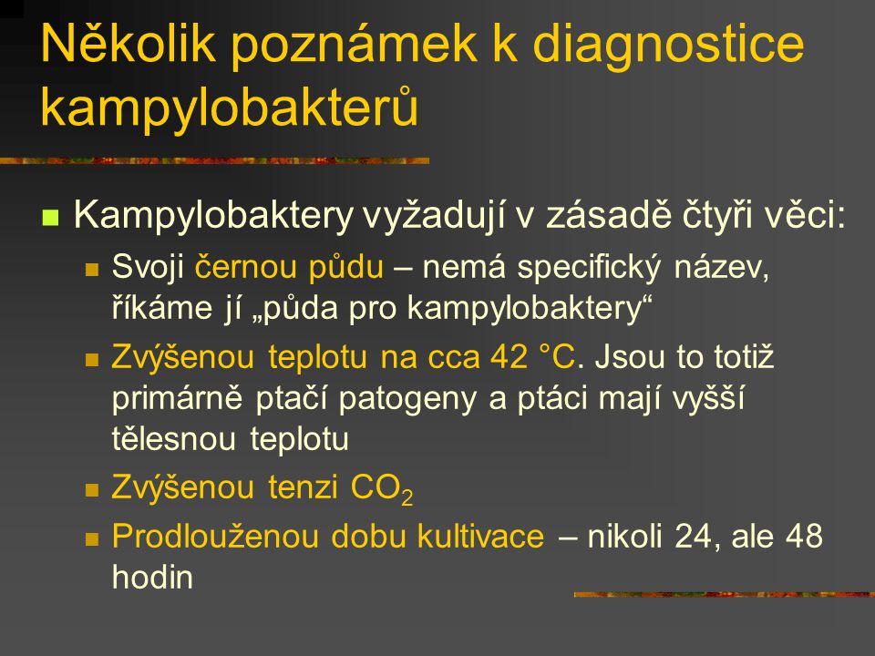 Několik poznámek k diagnostice kampylobakterů