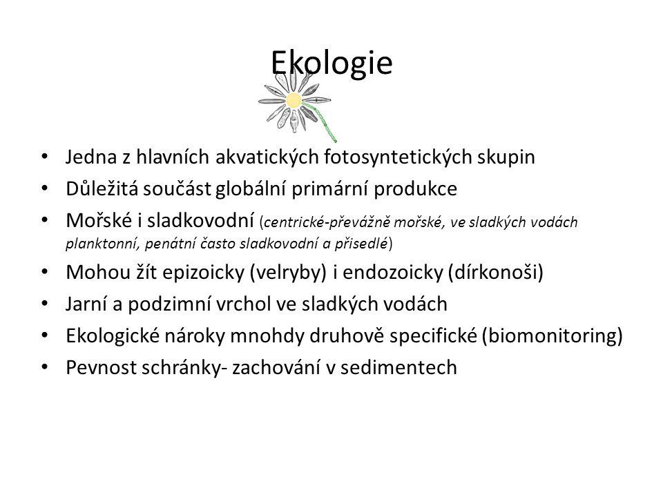 Ekologie Jedna z hlavních akvatických fotosyntetických skupin