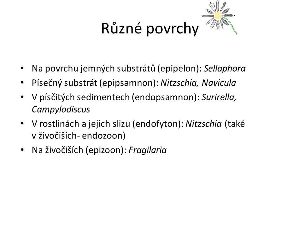 Různé povrchy Na povrchu jemných substrátů (epipelon): Sellaphora